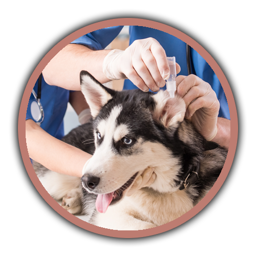 Chastain Veterinary Medical Group Providing Routine And